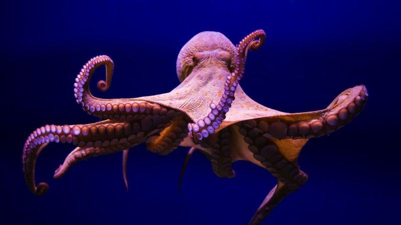 https: img.okezone.com content 2021 10 11 406 2484687 10-fakta-menakjubkan-tentang-gurita-punya-sifat-nakal-hingga-menakutkan-UwOnvbqD1o.jpg