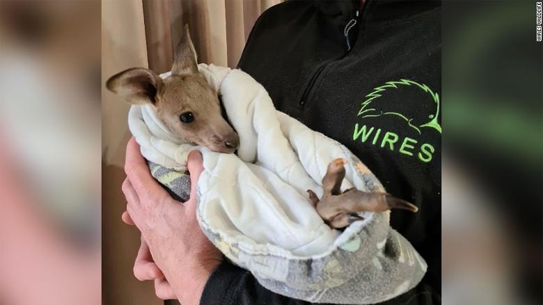 https: img.okezone.com content 2021 10 13 18 2485416 2-remaja-didakwa-usai-diduga-bunuh-14-kanguru-9yRsUT9hOK.jpg