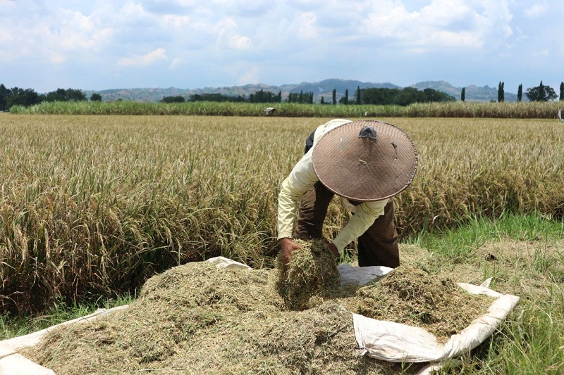 https: img.okezone.com content 2021 10 13 320 2485431 ratusan-hektare-lahan-sawah-disulap-jadi-tol-produksi-beras-berkurang-berapa-pMRSGjhMmZ.jpg