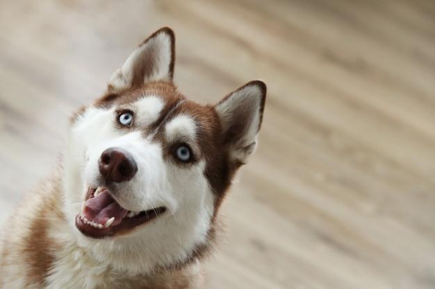 https: img.okezone.com content 2021 10 13 406 2485887 hasil-penelitian-terungkap-manusia-dan-anjing-hidup-bareng-12-000-tahun-lalu-OiswkTQvzh.jpg