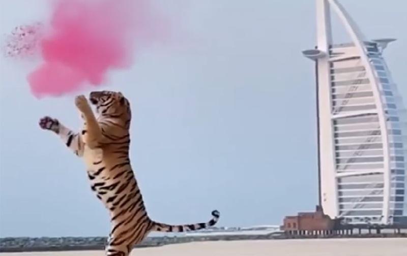 https: img.okezone.com content 2021 10 14 18 2486104 pasangan-ini-dikecam-usai-gunakan-harimau-liar-untuk-pesta-gender-reveal-DC3QnhVgQo.jpg