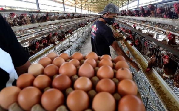 https: img.okezone.com content 2021 10 14 620 2486460 stabilkan-harga-ribuan-ton-telur-dari-peternak-akan-diserap-bumn-klaster-pangan-yQV3PBgFeO.jpg