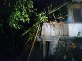 Seorang Wanita Tewas Tertimpa Pohon Tumbang di Puncak