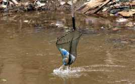 Plastik Ramah Lingkungan dari Gembili