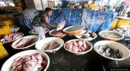 Konsumsi Ikan RI Kalah Jauh dari Malaysia   Jepang