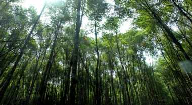 Pengelolaan Hutan Ibarat Dua Sisi Mata Uang