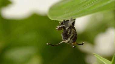 Ahli Entomologi Temukan Ulat Aneh dengan Empat Tentakel
