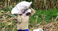 Stop Impor Jagung!