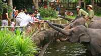 Medan Zoo Miliki 57 Binatang