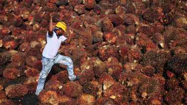 Ekspor Sumut Anjlok Hingga 23,39% karena CPO