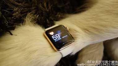 Miliarder China Berikan Dua Apple Watch Edition untuk Anjing
