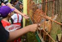Aplikasi Ragunan Zoo Diluncurkan