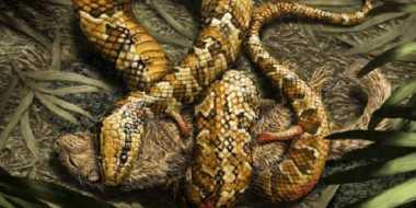 Fosil Ular Berkaki Empat Ditemukan di Brasil