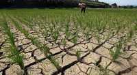 12.300 Sawah di Jawa Barat Kekeringan akibat El Nino