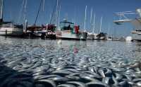 Amerika Andalkan Produk Ikan Indonesia