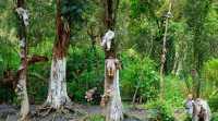 Hutan di Jepang Dipakai Lokasi Syuting Bunuh Diri