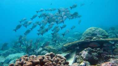 Memanasnya Suhu Laut Ancam Pasokan Makanan