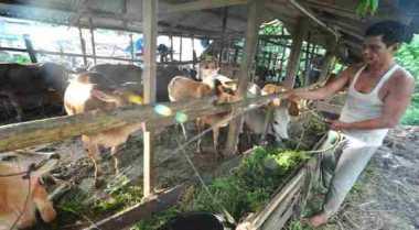 \      Pedagang Hewan Kurban Mulai Bermunculan di Palembang   \