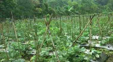 \   Dianggap Meresahkan, BKPM Revisi UU Hortikultura   \