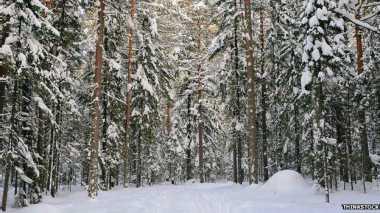 Tebak, Berapa Jumlah Seluruh Pohon di Dunia?