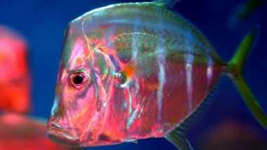 """Ternyata Ikan Memiliki """"Mode Menghilang"""" dalam Air"""