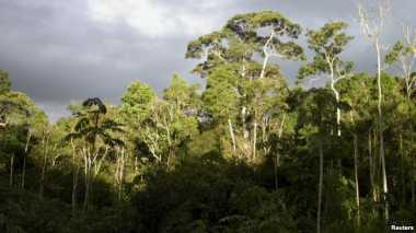 Hutan Amazon Terancam Lenyap?