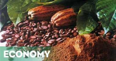 \Prancis Minati Kakao Asal Sulawesi Utara\
