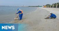 Ribuan Bangkai Ikan Diangkut, Pantai Ancol Kinclong Lagi