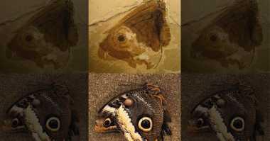Ditemukan 'Kupu-Kupu' dari Zaman Jurrasic