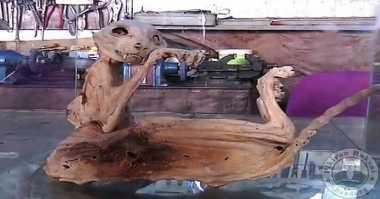 Mumi Predator Bertaring & Berekor Cambuk Ditemukan di Turki