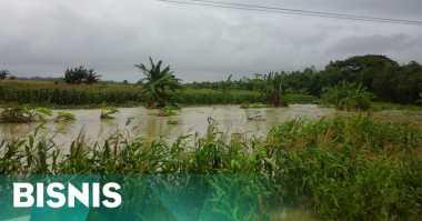 \1.900 Ha Lahan Lumbung Padi Nasional Terendam Banjir\
