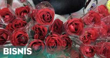 \Jelang Hari Valentine, Petani Mawar Kewalahan Penuhi Pesanan\