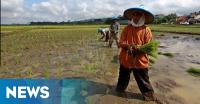 Bantu Kesejahteraan Petani, TNI Kawal Cetak Sawah di Kupang