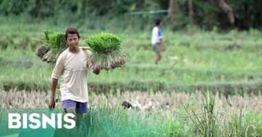 \Daya Beli Petani di Sumatera Utara Mulai Membaik   \