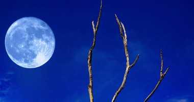 Mengenal Lebih Dekat Bulan Biru