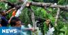 Pohon Tumbang Lumpuhkan Jalan Lintas Bengkulu-Lampung