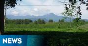 INFO MUDIK: Kebun Teh Segarkan Mata Pemudik