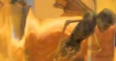 Jasad Berbentuk Aneh Tanda Alien Pernah Kunjungi Bumi?
