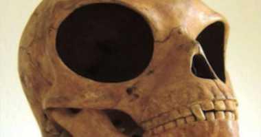 Ditemukan Tengkorak Besar Bermata Besar di Denmark