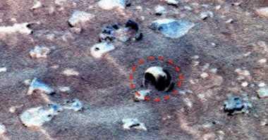Cangkang Kerang Laut Diklaim Ditemukan di Mars