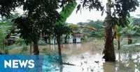 Banjir Rendam Areal Persawahan di Tasikmalaya, Petani Dipastikan Gagal Panen