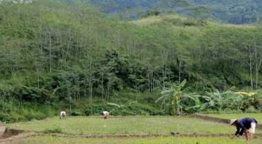\Vietnam Berminat Kerjasama Produksi Alat Pertanian\