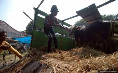 \KATA MEREKA: Daging Kerbau Masuk RI, Begini Respons Masyarakat\
