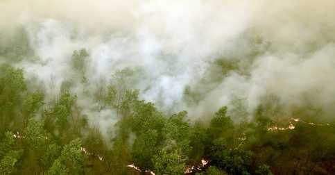 Asap Kebakaran Hutan di Riau Mulai Masuk Singapura