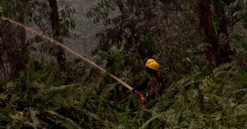 Hutan Terbakar, Dua Kota di Riau Berselimut Kabut Asap