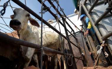 \750 Ton Daging Kerbau Impor dari India Masuk di Akhir Agustus\