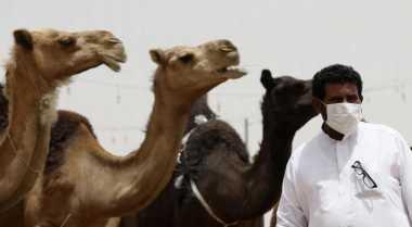 \Kenaikan Harga Unta Akibatkan Resesi di Pasar Ternak Mesir\