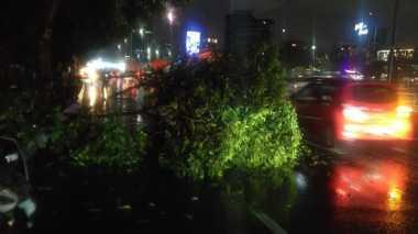 Hujan Deras, Dua Pohon Tumbang di Wilayah Jakarta Timur