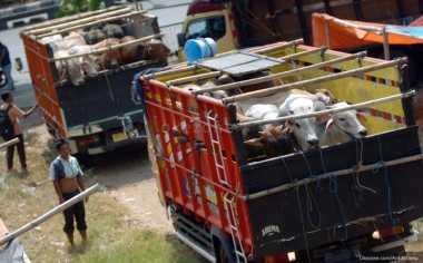 \TERPOPULER: Kemendag Beri Izin Impor 300 Ribu Ekor Sapi Bakalan\