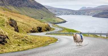 Google Manfaatkan Domba untuk Layanan Street View